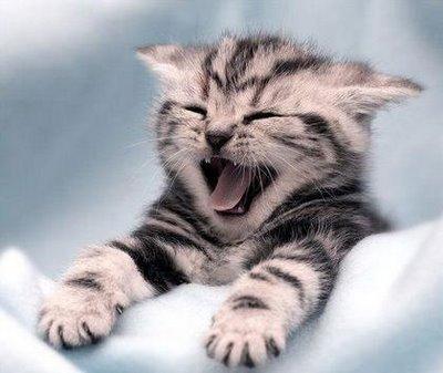 funny-cats-a10